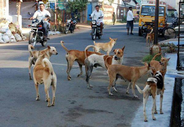 शहरातील भटक्या कुत्र्यांचा बंदोबस्त करा; राष्ट्रवादीचे उपाध्यक्ष अमित बच्छाव यांची मागणी
