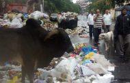 पिंपरी चिंचवडमधील कचराकुंड्या 'ओव्हरफ्लो', स्वच्छ भारत अभियानाचा बोजवारा