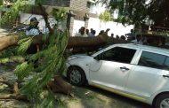गंगानगर येथे वाहनावर झाड कोसळले