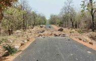 महाराष्ट्र दिनी गडचिरोलीत नक्षलवाद्यांचा हल्ला; भूसुरुंग स्फोटात १६ जवान शहीद