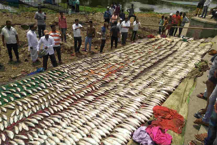 इंद्रायणी नदीत आढळले हजारो मृत मासे